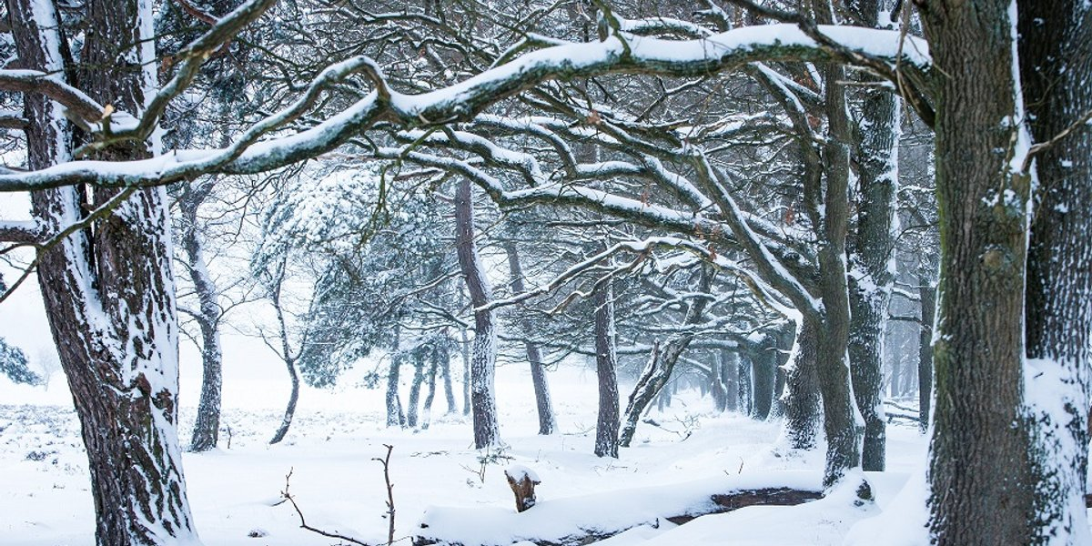 Winter in the Netherlands, National park the Hoge Veluwe!