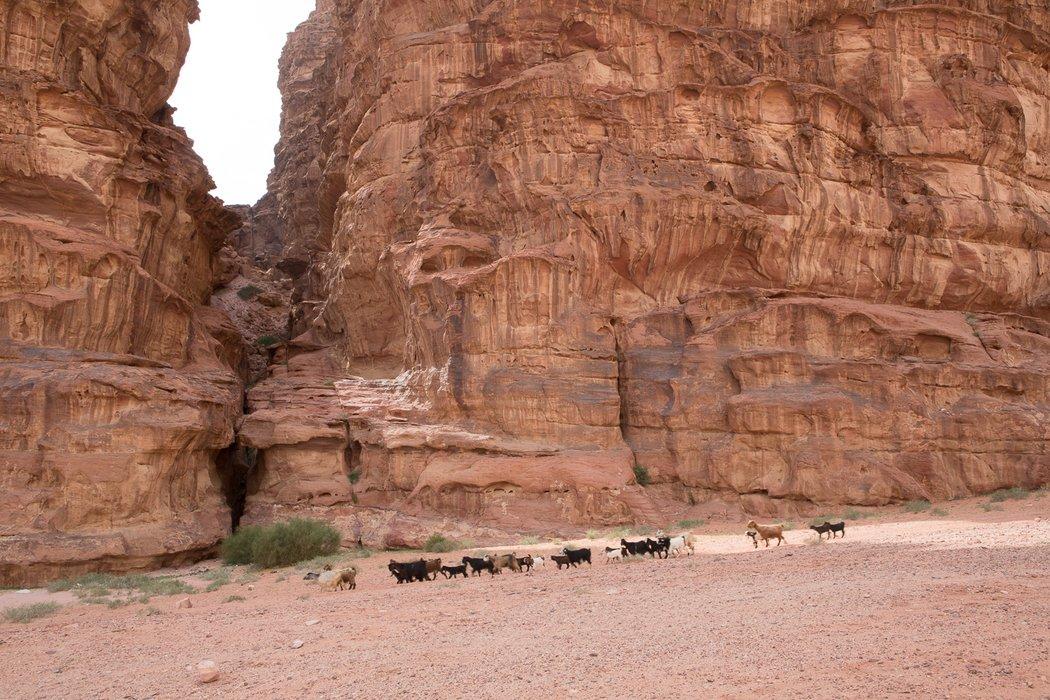 Wadi Rum Peak Hour