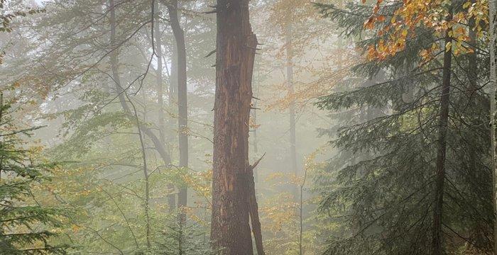Jesienne Gorce dla koneserów. Deszcz + śnieg + mgła = fantastyczna wędrówka!