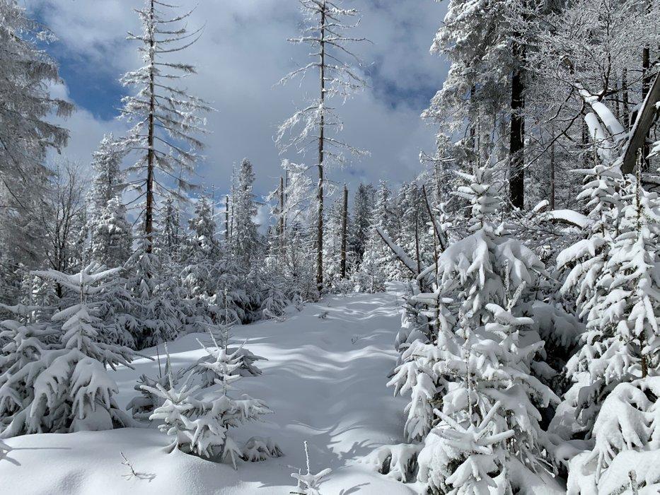 Śnieżnica (szlak z Dobrej)