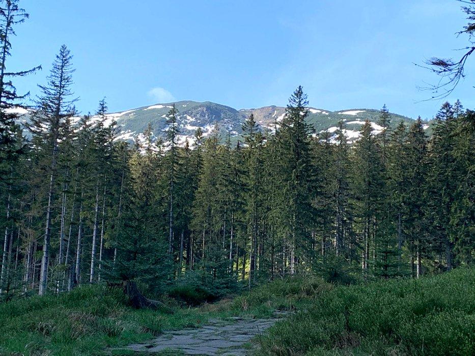 Babia Góra, widok z zielonego szlaku z Zawoi-Markowa