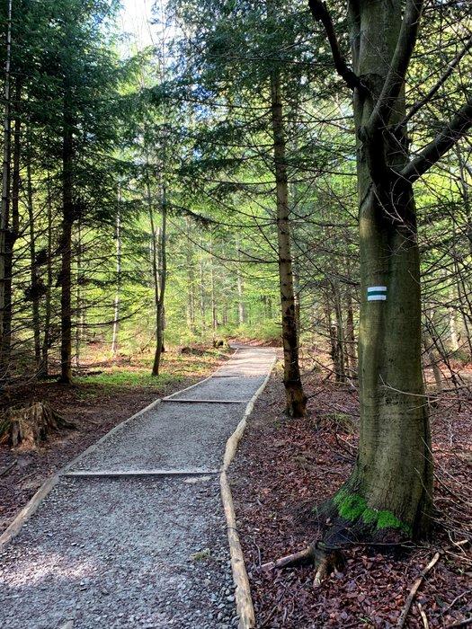 Zielony szlak z Zawoi-Markowa na Markowe Szczawiny
