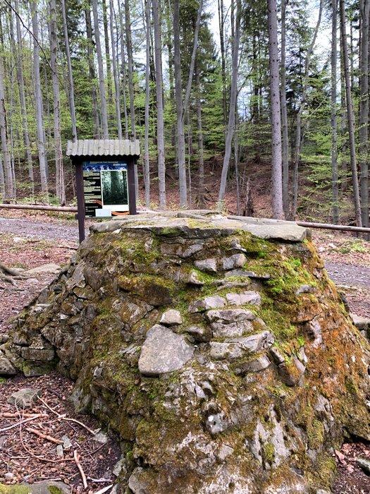 Tu ponad 100 lat rosła Gruba Jodła