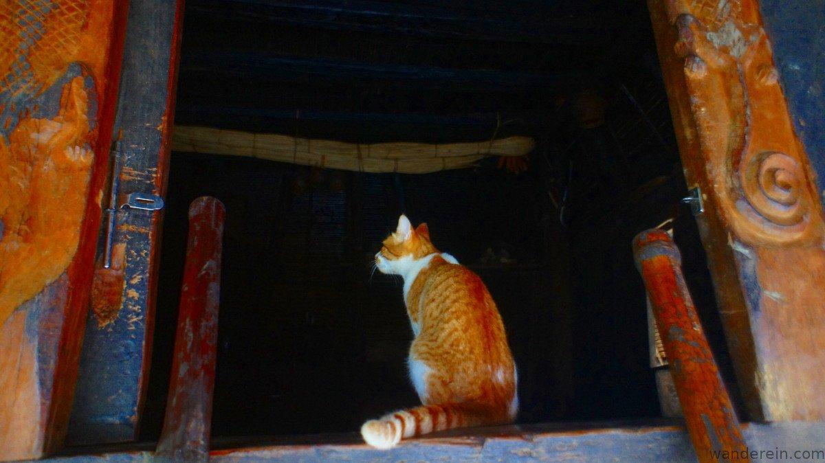 Cat examines the main house for any rats ;)