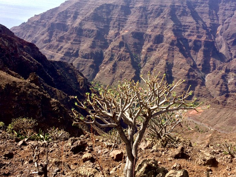 Typical canyon vegetaion in La Gomera