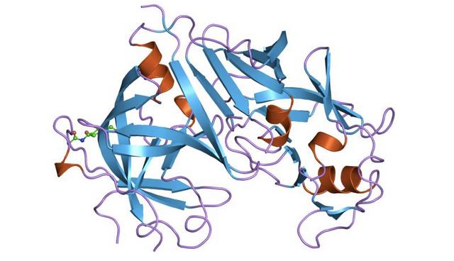 Picture Molecule Renin 800 460.png