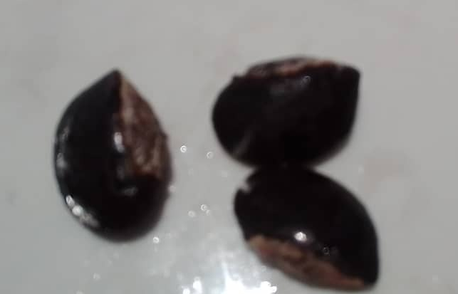 Semillas de caimito (2) LISTAS.png