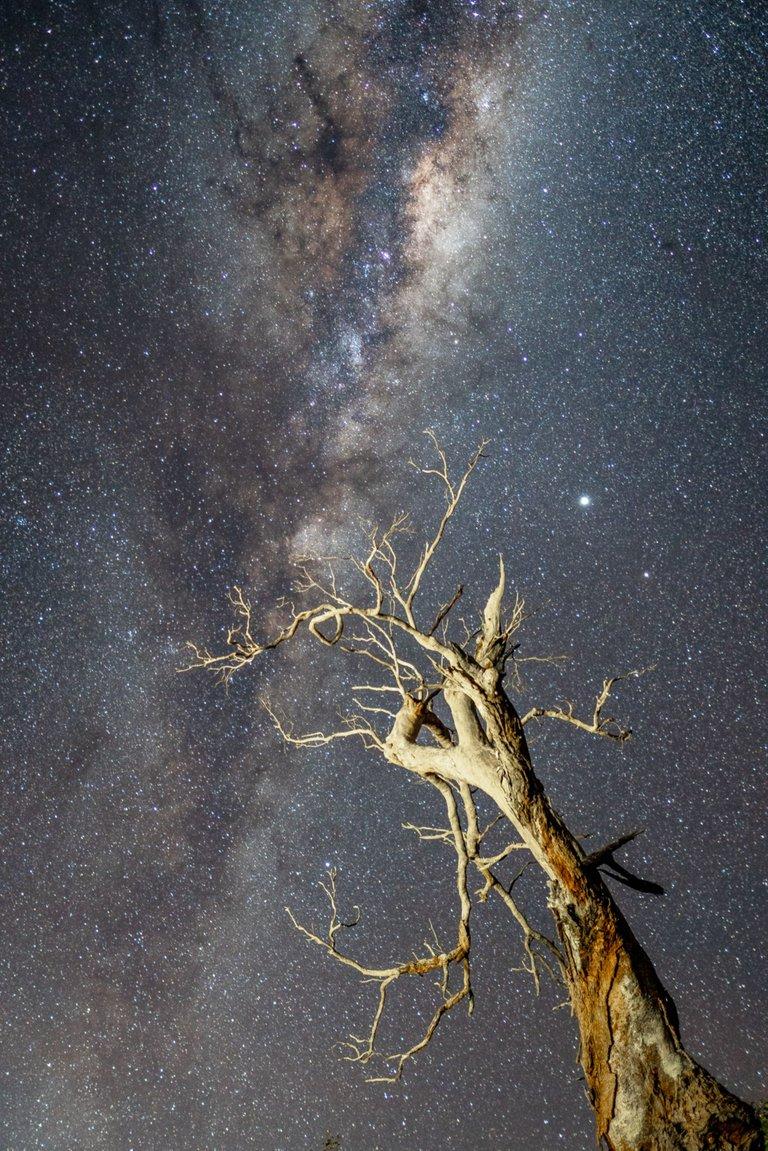 treestars-1.jpg