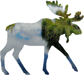 shasta2021sept20th47mymoose804io.png