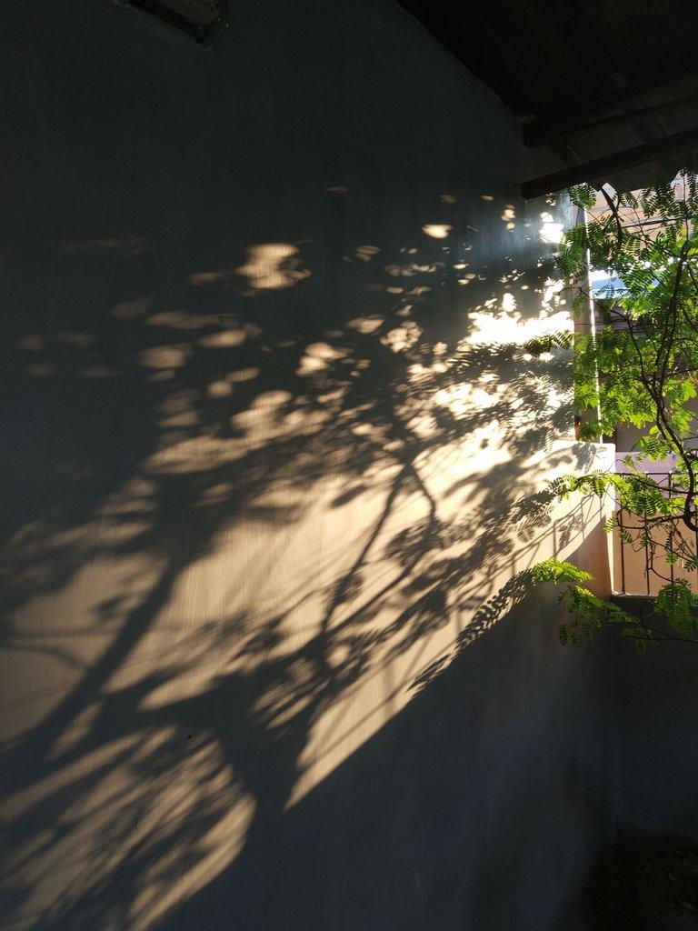 Shadows on the Porch 01.jpg