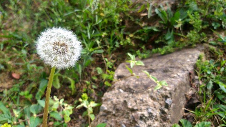 PicsArt_04-05-09.20.13.jpg