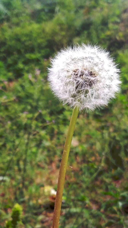 PicsArt_04-05-09.21.43.jpg