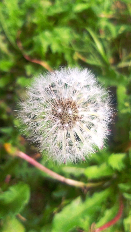 PicsArt_04-05-09.25.52.jpg