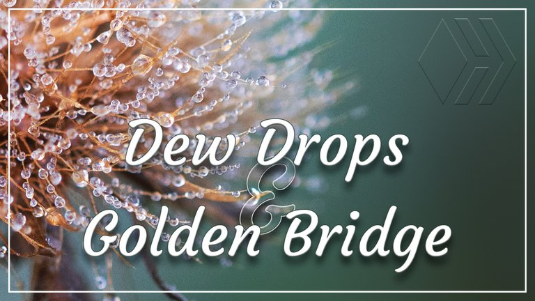 Dew Drops and a Golden Bridge - Sunrise at the Reservoir
