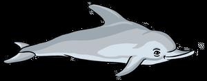 delfino.png