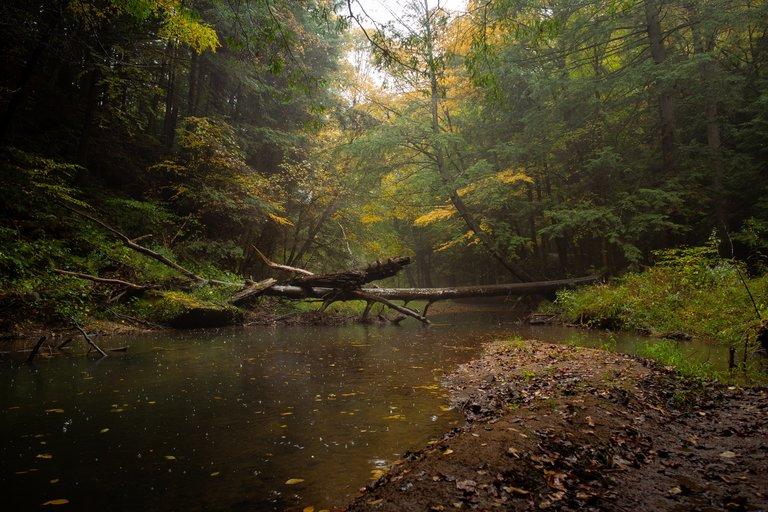 Creek Timelapse83.jpg