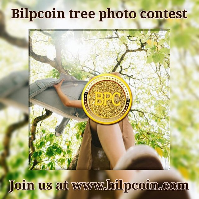 bilpcoin tree.jpg