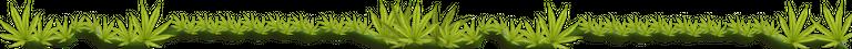 cannabis div 2.png