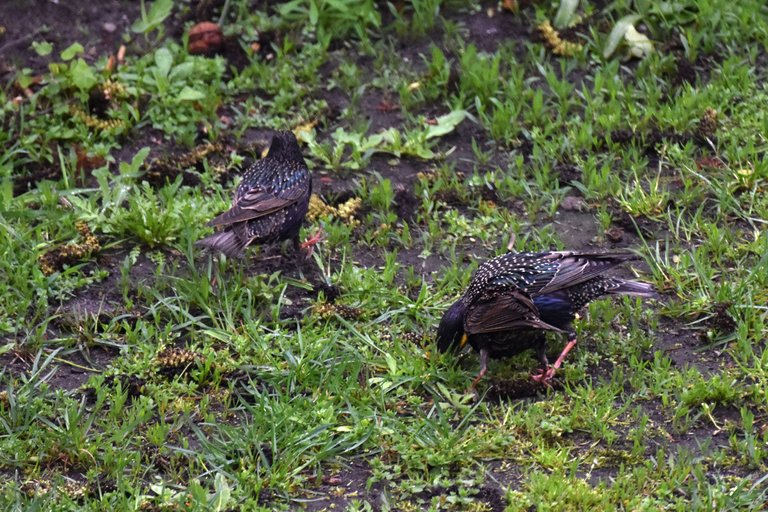 Starlings garden 6.jpg