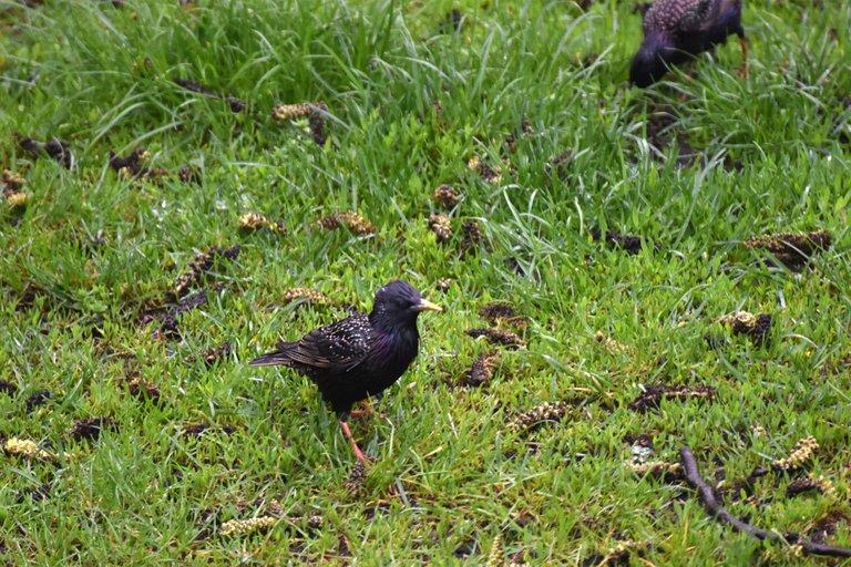 Starlings garden 2.jpg