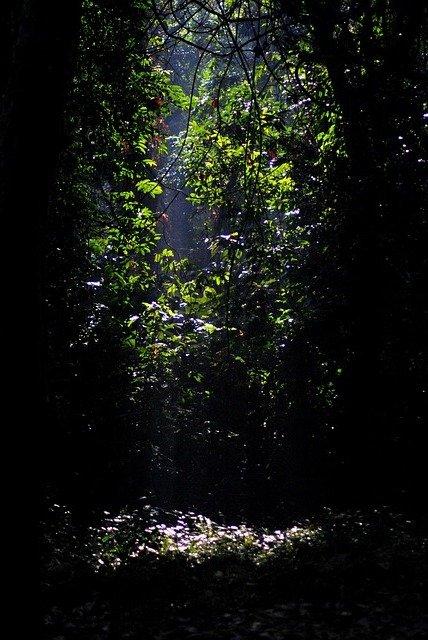 jungle389880_640.jpg