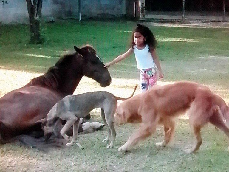 """Sarah, los perros y """"Pícaro"""" el caballo"""