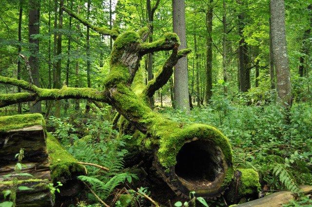 Bialowieza_National_Park_in_Poland0029-e1466075688509.jpg