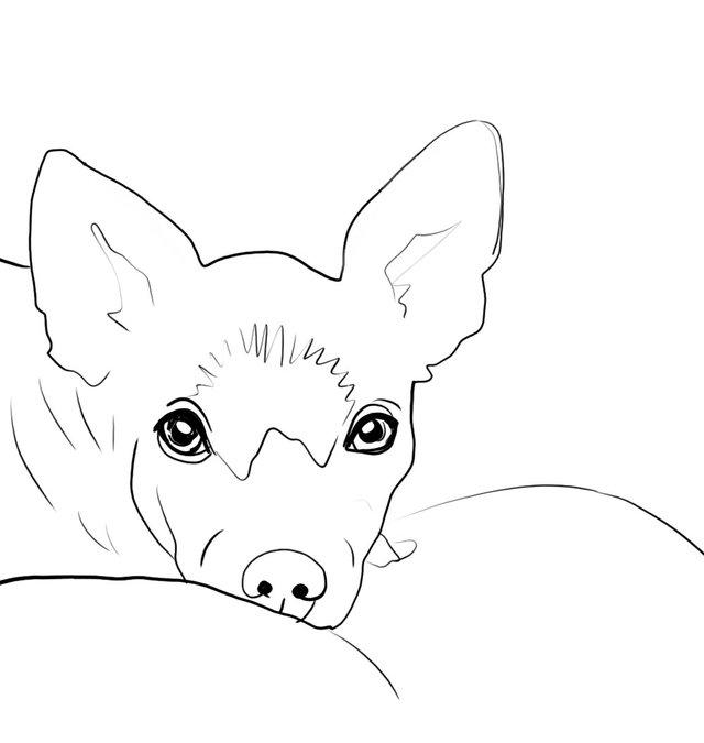 dog(423).jpg
