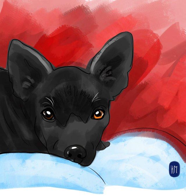 dog(421).jpg