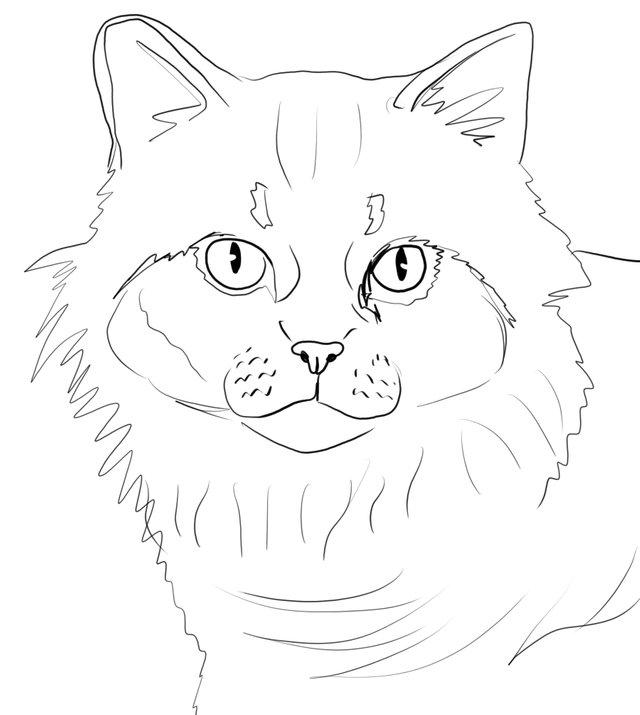 cat(414).jpg