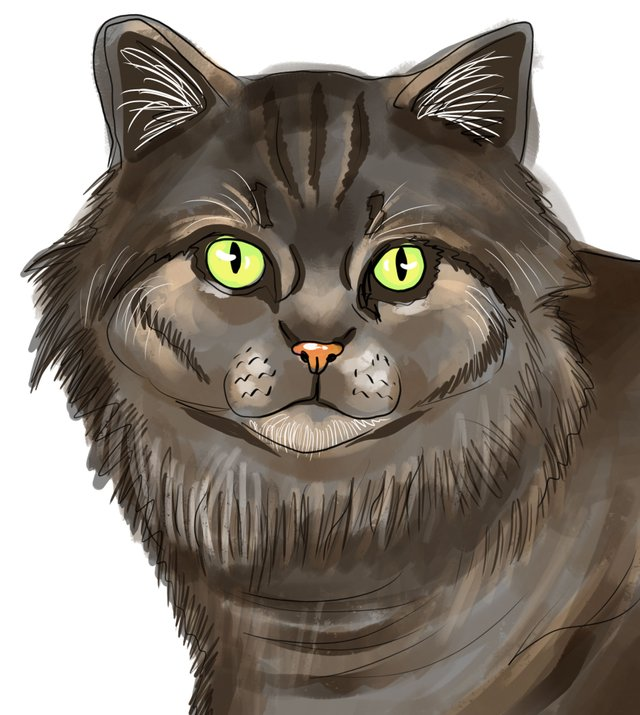cat(422).jpg