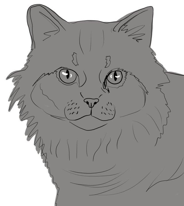 cat(416).jpg