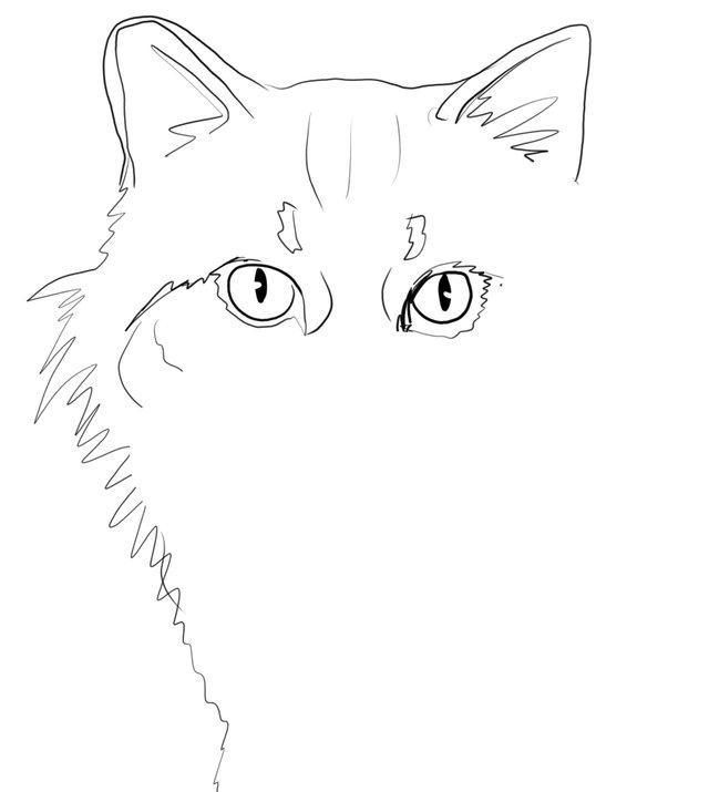 cat(413).jpg