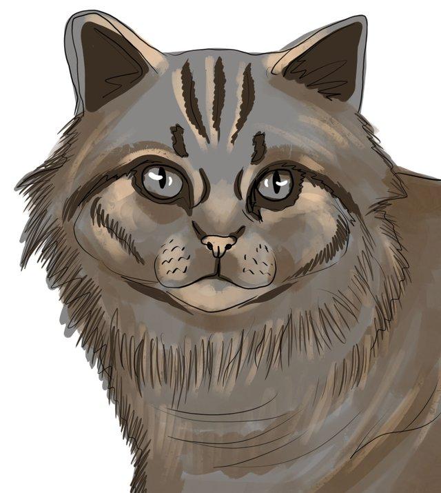 cat(420).jpg