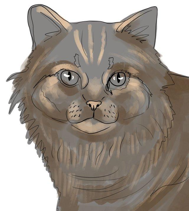 cat(418).jpg