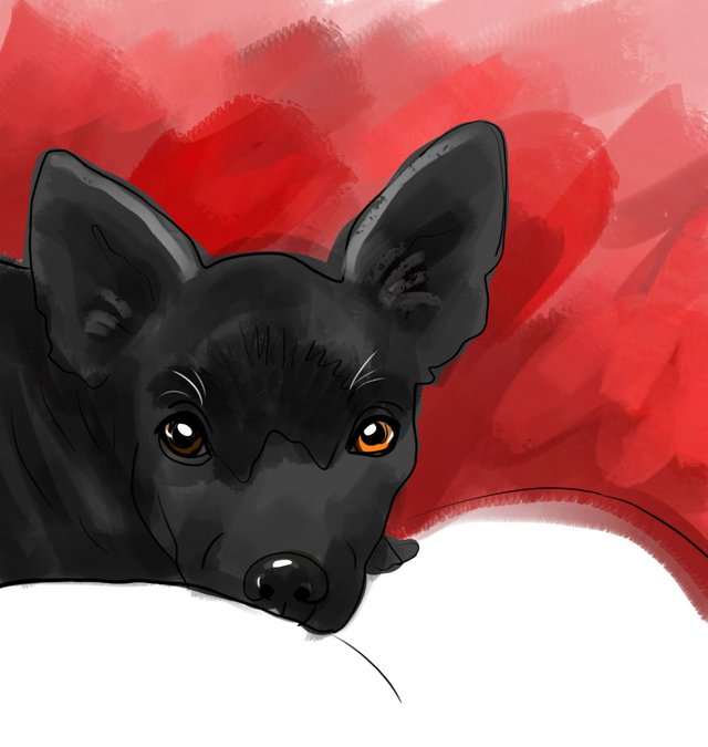 dog(428).jpg