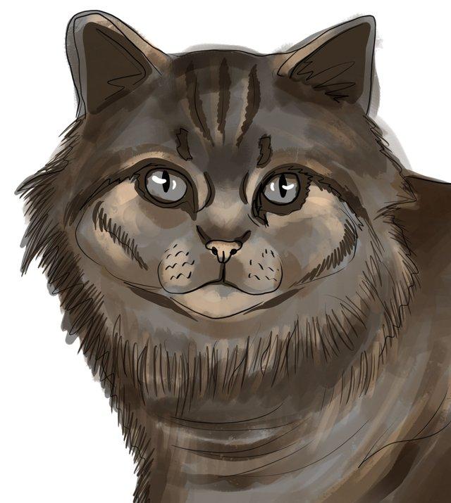 cat(421).jpg