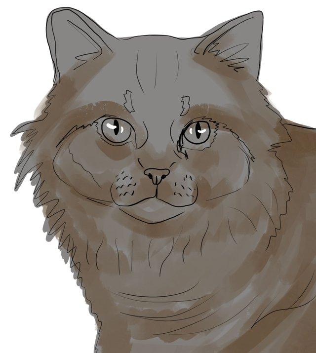 cat(417).jpg
