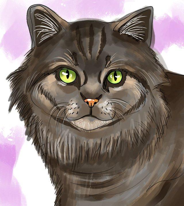 cat(423).jpg
