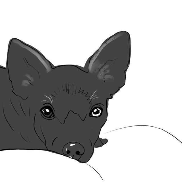 dog(424).jpg
