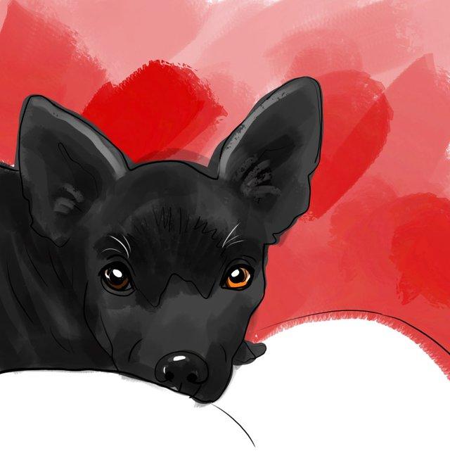 dog(427).jpg