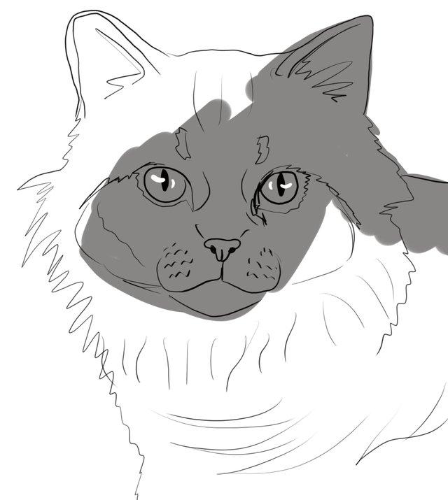 cat(415).jpg
