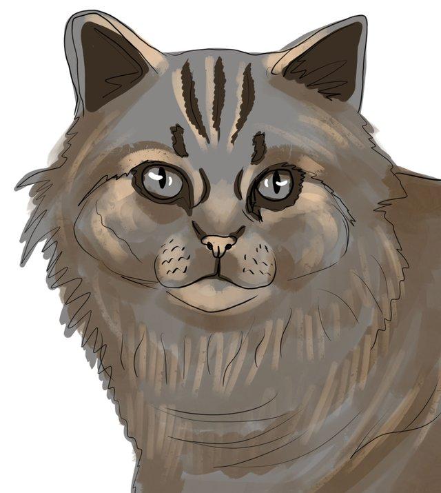 cat(419).jpg