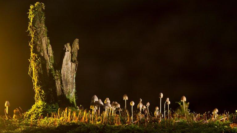 mushrooms2212899_1920.jpg