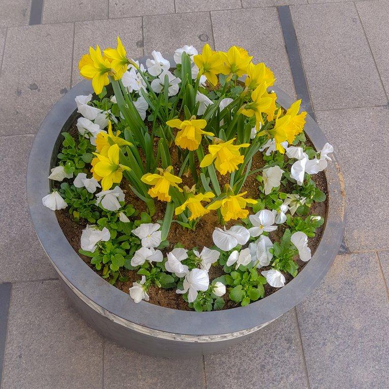 Street Flowers 2.jpg