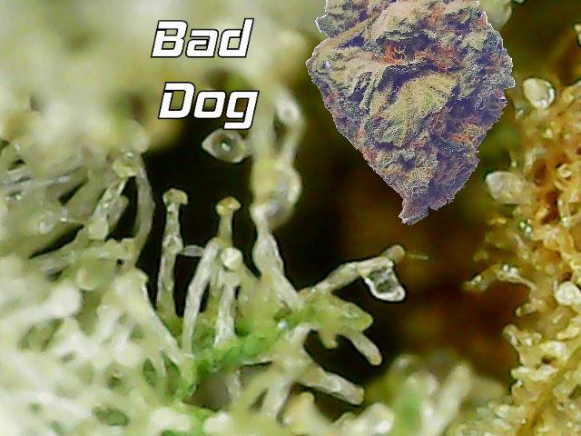 2020_bad_dog.png