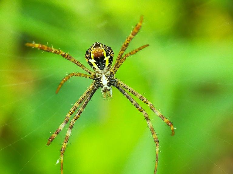 Spider (27).jpg