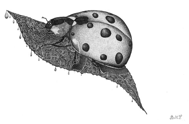 ladybug (8).jpg