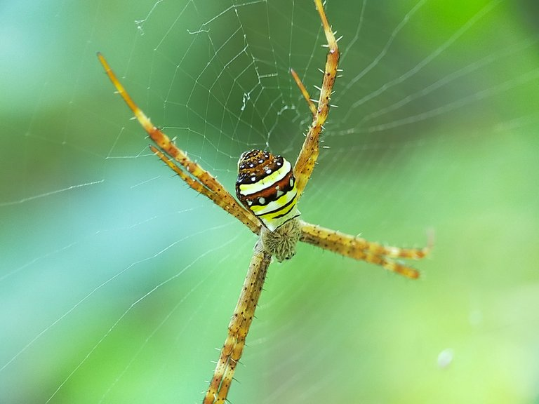 Spider (22).jpg
