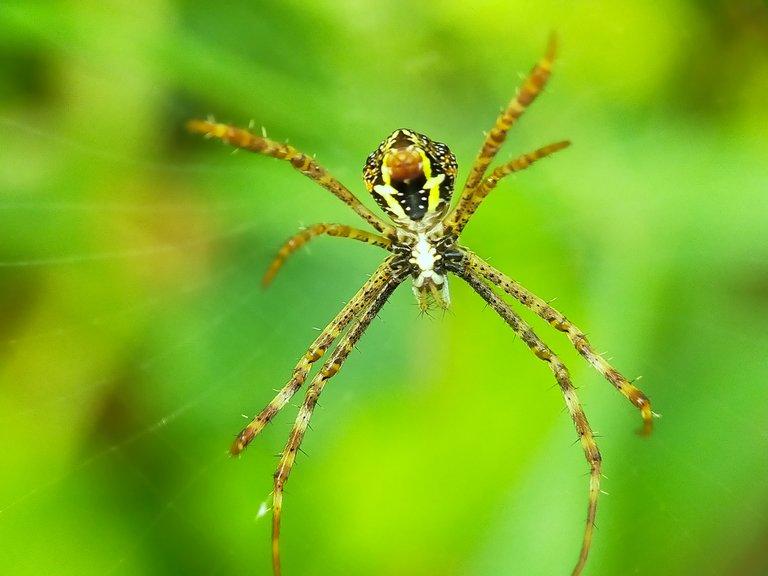 Spider (29).jpg